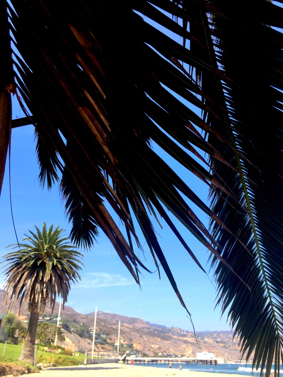 A dark green palm tree dominates the sky along side the beach with additional palm trees in the background at Malibu Lagoon family therapy activity.