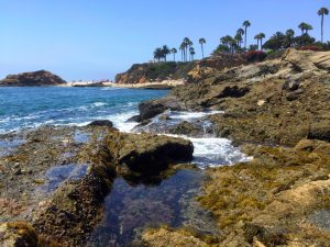 Crystal clear tide pools are in the foreground with blue ocean waves crashing over the rocks with beach goers in the background at the base of ocean cliffs with palm trees on a Connected Family Fun, LA; Aliso Beach, Laguna psychotherapy homework task for the family.