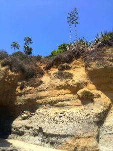 Connected Family Fun, LA; Aliso Beach, Laguna family activity visits steep, layered, sandy cliffs with yucca plants, palm and other trees and brown and green bushes at the top.