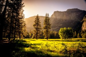 Beautiful outdoor scene of a meadow and pine trees as the sun goes down over the mountains in the distance during nature therapy.